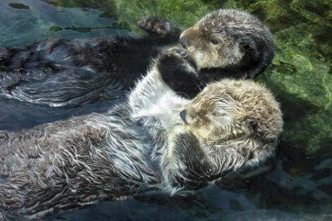 Et par sovende pattedyr