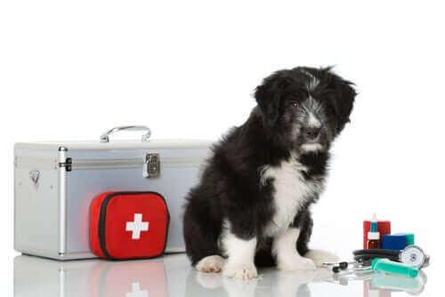 Hvordan lage et førstehjelpsskrin til kjæledyret ditt