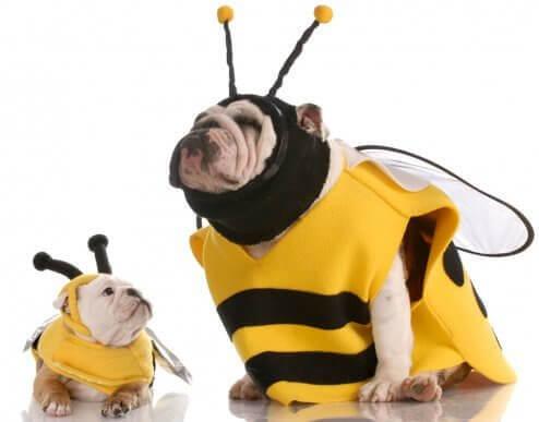 Tips for å velge kostyme til hunden din