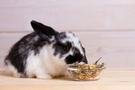 Hva kaniner bør spise