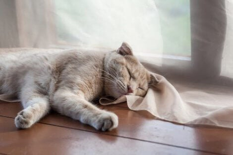 En katt som sover ved en dør