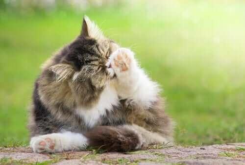 6 måter å forhindre hårballer hos katter på