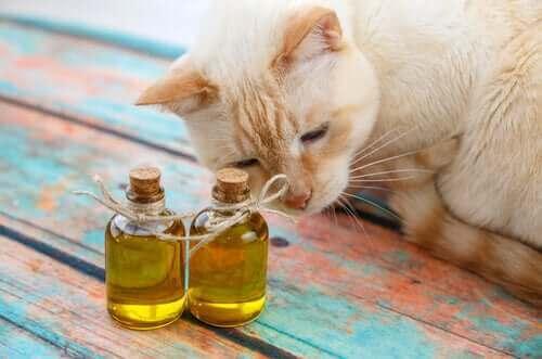 Katter og olivenolje