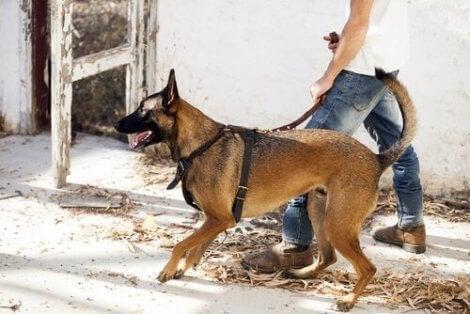 En person som går på tur med en hund
