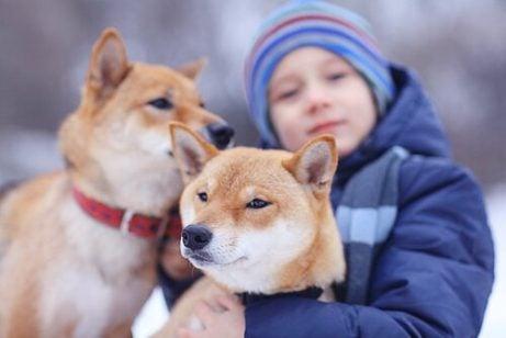 Gutt er klar for å adoptere to hunder