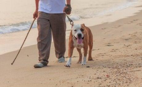 En hund som trekker i båndet