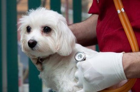 Redd hund hos dyrlegen