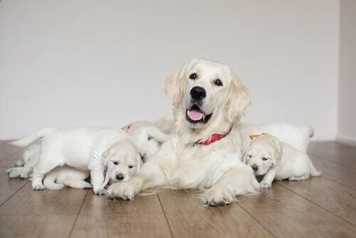 5 tips for pleie av hunden din etter fødselen