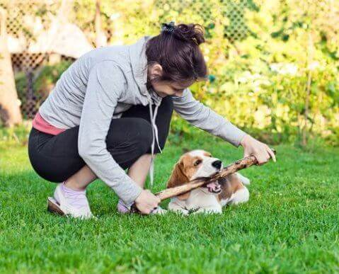 En hund og eier som leker med en pinne