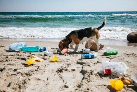 En hund på en forurenset strand