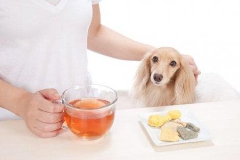En eier som står ved et bord med en kopp te til hunden sin