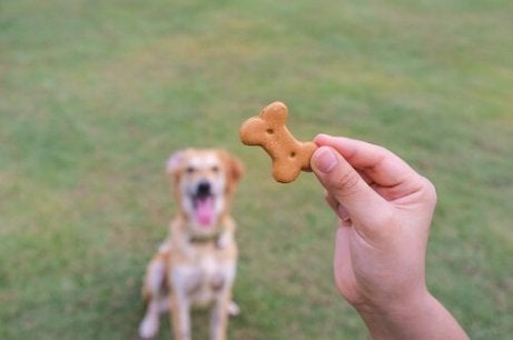 Eier som tilbyr hunden sin en kjeks, som er en måte å få hunden til å respondere på kommandoene dine