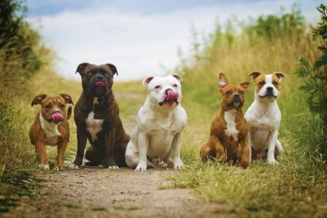 Vaksiner for hunder. Gruppe av hunder i byen.