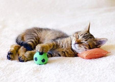 Kattunge som leker med en gaveball
