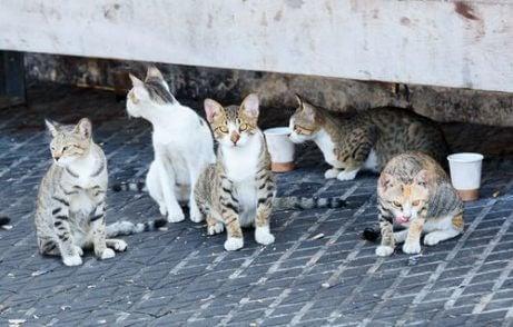 Disse forvillede kattene ville ha fordel av disse veldedige gavene