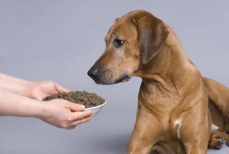 Hunden blir matet skikkelig for å eliminere dårlig ånde