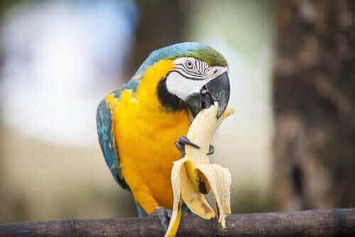 Kosthold og ernæring for papegøyer - Fakta og tips