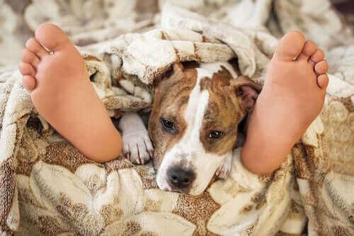 Det store spørsmålet: Er det trygt å sove med kjæledyret ditt?