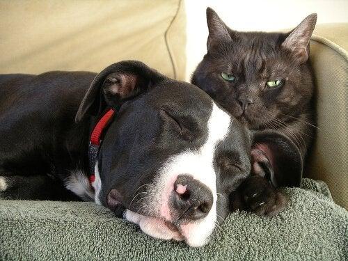 Alt du trenger å vite om vaksiner for hunder og katter