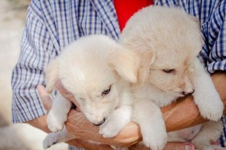 Adoptere en ny hund eller kanskje to som disse valpene