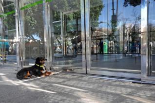Hunden som ventet på eieren sin utenfor sykehuset