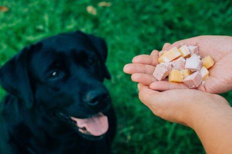 kosthold for å hjelpe hvis hundens pels faller ut
