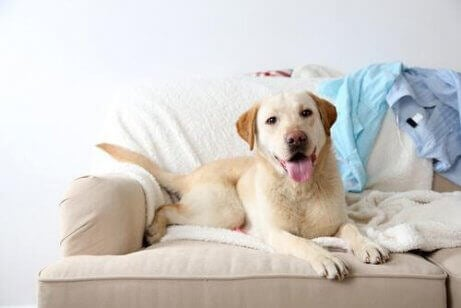 En hund som sitter i sofaen