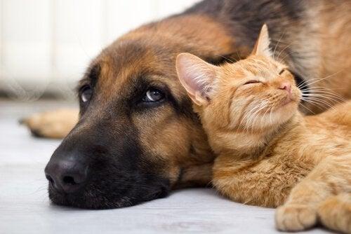 Argentina: landet med flest kjæledyr per innbygger