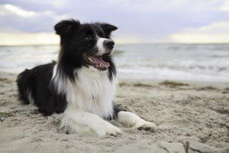 En hund som legger seg på stranden