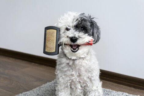 En hund med børste