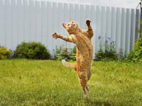 En hoppende katt
