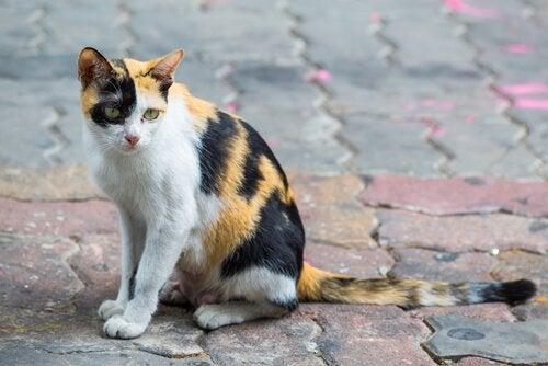 Forlatte dyr: Hver fjerde minutt blir en hund eller katt mistet eller forlatt