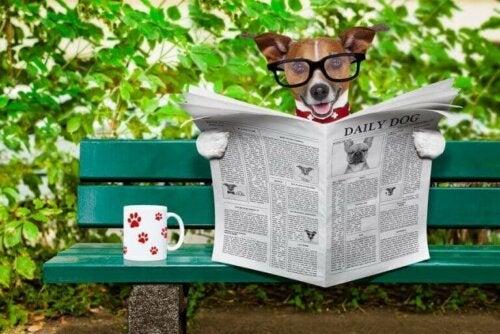 Hund med briller leser avisen