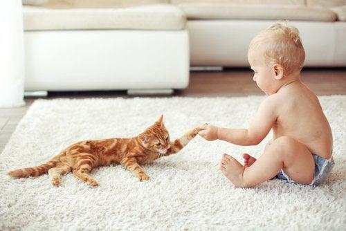Oransje katt og baby på et teppe