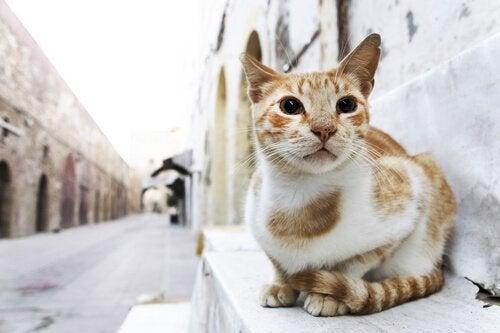 Oransje og hvit katt på en trapp