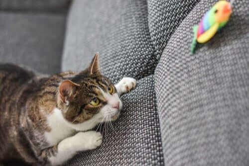 En katt som følger med på et leketøy.