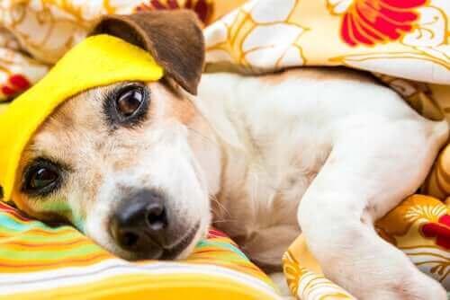 Finnes det søvnforstyrrelser hos hunder?
