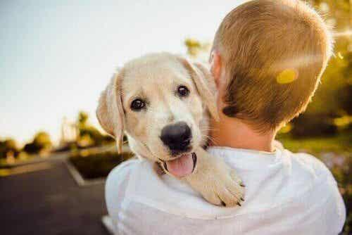 Fem av de mest kjærlige kjæledyrene!
