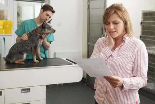 Forsikringer for kjæledyr: Ansvar og helsedekning