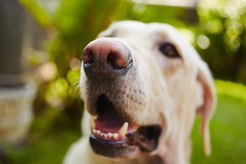 Nærbilde av en lykkelig hund.