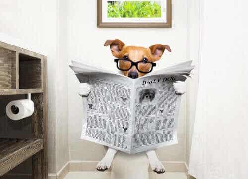 Kjæledyrpleie - Hvordan stoppe diaré hos hunder