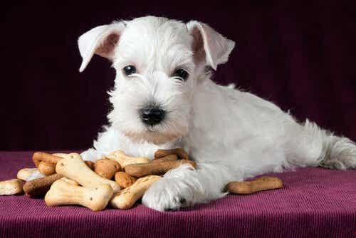Sunne godbiter til hunden din