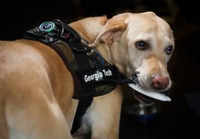 En hund som bruker vesten som lar hunder snakke