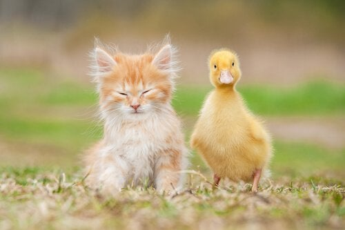 Hvilke dyr kan være kjæledyr og hvilke kan ikke være det?