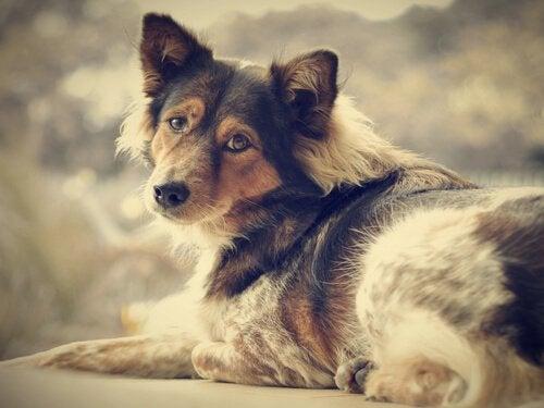 Adopter en hund og si farvel til ensomheten