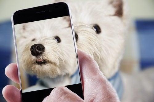 Ikke bruk blits når du tar bilder av kjæledyret ditt.