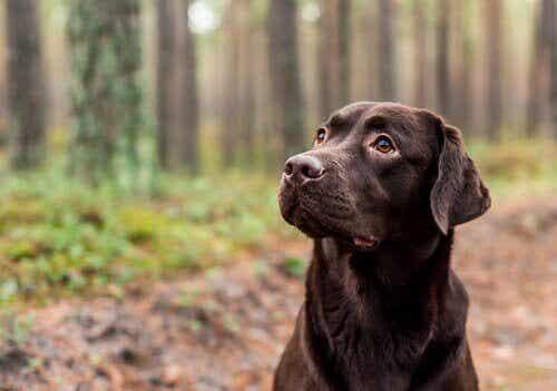 En hunds farge kan påvirke dens forventede levealder