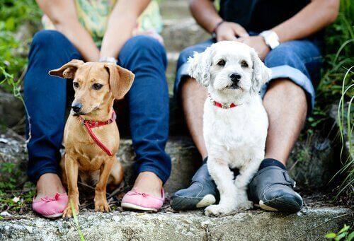 To hunder som sitter på en trapp med to mennesker bak