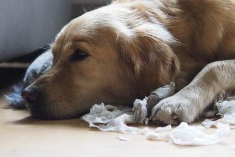 En hund som legger seg
