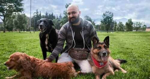 Det er mulig å gjenopplære en aggressiv hund